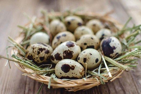 можно ли есть яйца при правильном питании