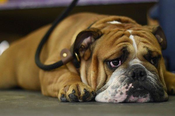 как определить диабет у собаки
