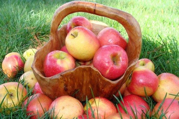 можно ли яблоки при диабете