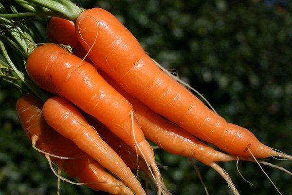 можно ли морковь при сахарном диабете 2